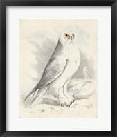 Framed Meyer Snowy Owl