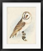 Framed Meyer Barn Owl