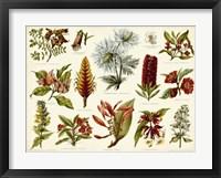 Framed Tropical Botany Chart I