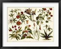 Framed Tropical Botany Chart II