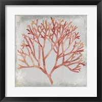 Framed Watercolor Coral IV