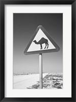 Framed Qatar, Al Zubarah. Camel Crossing Sign-Road to Al-Zubarah NW Qatar