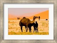 Framed Oman, Rub Al Khali desert, camels, mother and calves