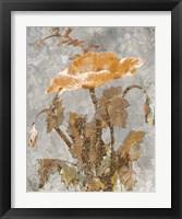 Framed Spice Poppy II