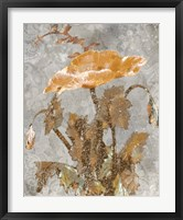 Spice Poppy II Framed Print
