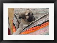 Framed Middle East, Turkey, Cappadocia, Dog