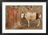 Framed Donkey and Cobbled Streets, Mardin, Turkey