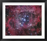 Framed Open Cluster within the Rosette Nebula (NGC 2244)