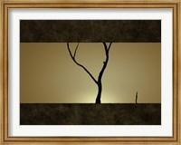 Framed Tree at Sunset