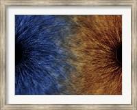 Framed Duality Motif