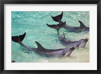 Framed Dolphins, Sea World, Gold Coast, Queensland, Australia