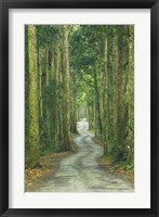 Framed Road through Rainforest, Lamington National Park, Gold Coast Hinterland, Queensland, Australia