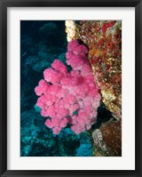 Framed Agincourt Reef, Great Barrier Reef, Queensland, Australia