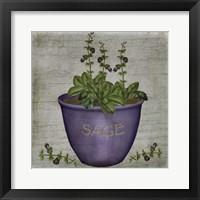 Herb Sage Framed Print