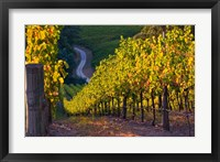 Framed Australia, Adelaide Hills, Summertown vineyard