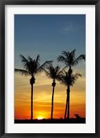 Framed Beach, Palm trees, Mindil Beach, Darwin, Australia