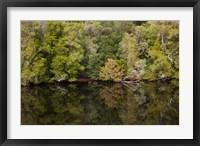 Framed Forest, Gordon Wild Rivers National Park, Australia