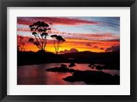 Framed Sunset, Gum Tree, Binalong Bay, Bay of Fires, Australia