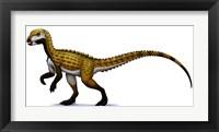 Framed Scutellosaurus
