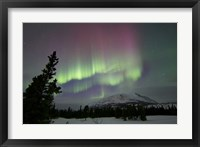 Framed Red and Green Aurora Borealis over Carcross Desert, Canada