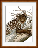 Framed Thylacoleo, a Marsupial Lion from the Pleistocene Age