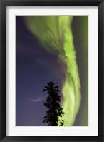 Framed Aurora Borealis with Tree and Shooting Star, Yukon, Canada
