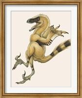 Framed Bambiraptor