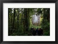 Framed Tane Mahuta, Giant Kauri tree in Waipoua Rainforest, North Island, New Zealand