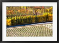 Framed Autumn in Mt Difficulty Vineyard, Central Otago, New Zealand