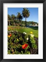 Framed Poppy flowers, Picton, Marlborough, South Island, New Zealand