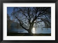 Framed Willow Tree, Lake Wanaka, Wanaka, South Island, New Zealand