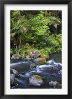 Framed New Zealand, Hatea River, Whangarei Falls, Northland