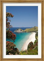 Framed Pohutukawa Tree, Beach, North Island, New Zealand