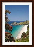Framed Pohutukawa Tree, Beach, North Island, New Zealand
