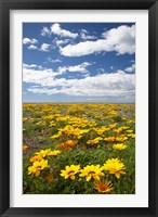 Framed Wildflowers, Marine Parade, Napier Waterfront, Hawkes Bay, North Island, New Zealand