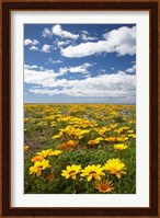 Framed Wildflowers, Marine Parade, Napier Waterfront, Hawkes Bay, North Island, New Zealand