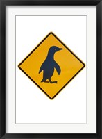Framed Penguin Warning Sign, New Zealand