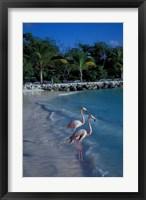 Framed Sonesta Island,  Aruba, Caribbean