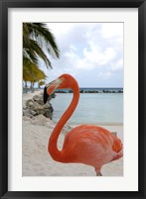 Framed Pink Flamingo on Renaissance Island, Aruba, Caribbean