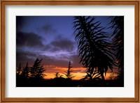 Framed Dunedin, South Island, New Zealand, Trees and sunset