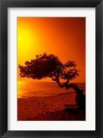 Framed Lone Divi Divi Tree at Sunset, Aruba