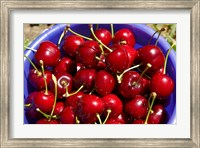Framed Bucket of cherries, Cromwell, Central Otago, South Island, New Zealand