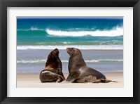 Framed New Zealand, South Island, Hooker's Sea Lion