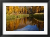 Framed Poplar trees in Autumn, Bannockburn, Cromwell, Central Otago, South Island, New Zealand