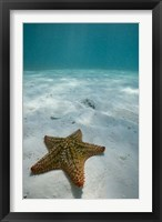 Framed Bahamas, Marine Life, Sea star, Golden Rock Beach