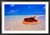 Framed Conch at Water's Edge, Pristine Beach on Out Island, Bahamas