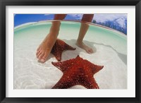 Framed Starfish and Feet, Bahamas, Caribbean