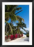 Framed Bahamas, Eleuthera, Harbor Island, Dunmore, Flora