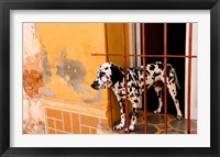 Framed Spotted dog and colorful wall in Trinidad Cuba