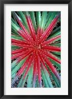 Framed Cactus Detail, Chrstoffel National Park, Curacao, Caribbean